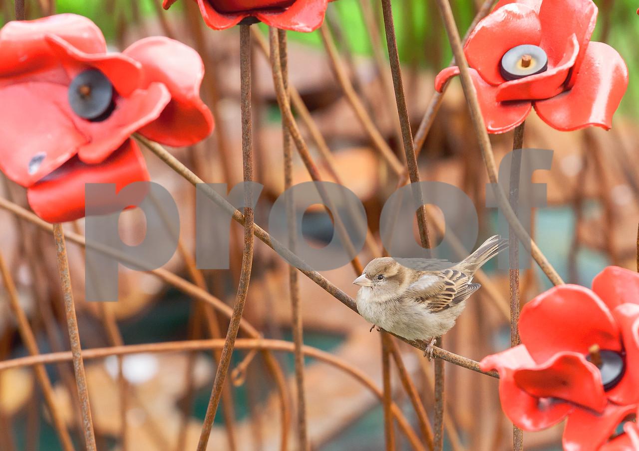 Cockney Sparrow on Red Ceramic Poppy